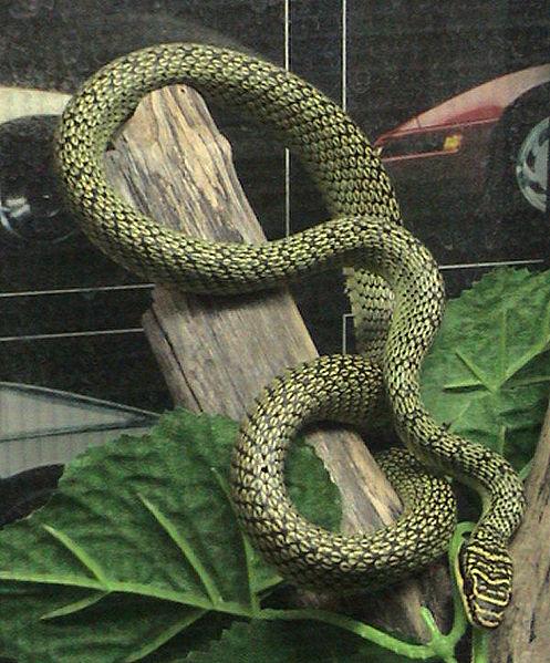 vliegende slang